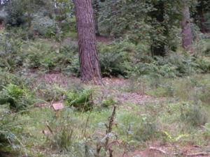 graf op een natuurbegraafplaats